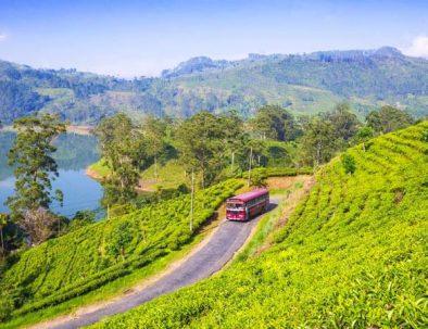Wunderschone-Sri-Lanka-Reise